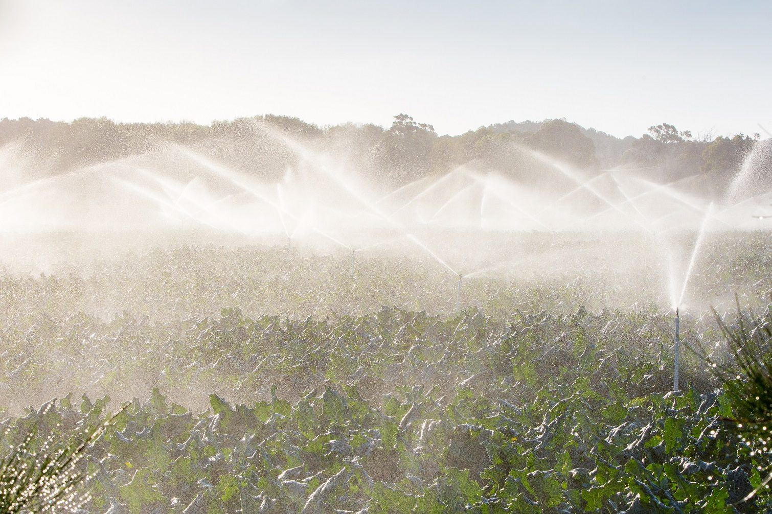 Crop sprayers in action in Mornington Peninsula, Victoria, Australia