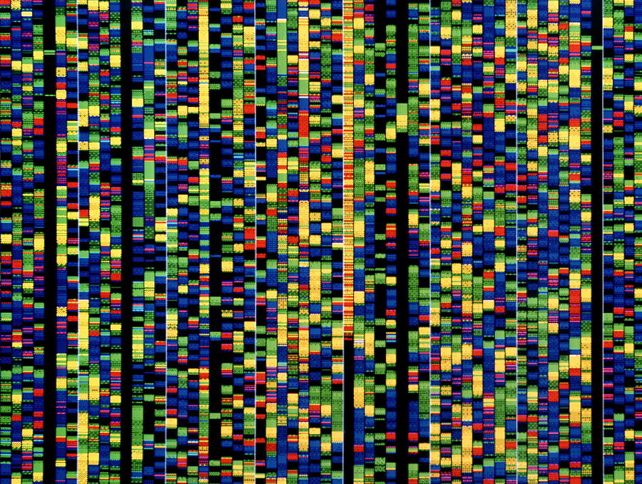 A human genetic sequence on a computer screen